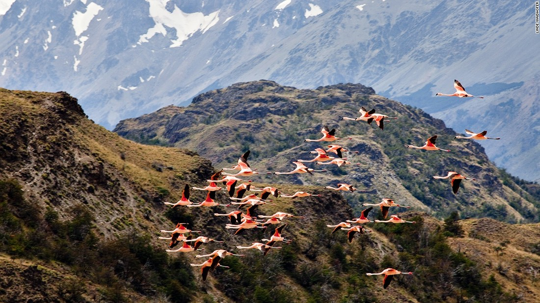 Patagonia's rich and varied landscapes are home to thousands of species of birds and mammals.