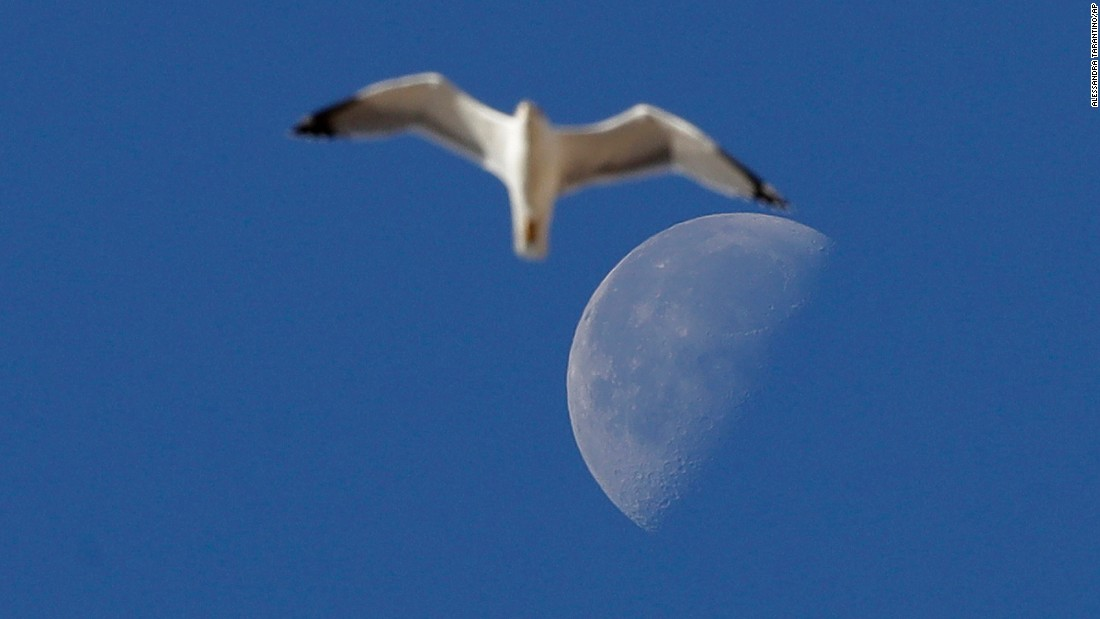 The moon is seen behind a seagull as it flies in the Vatican on Saturday, October 22.