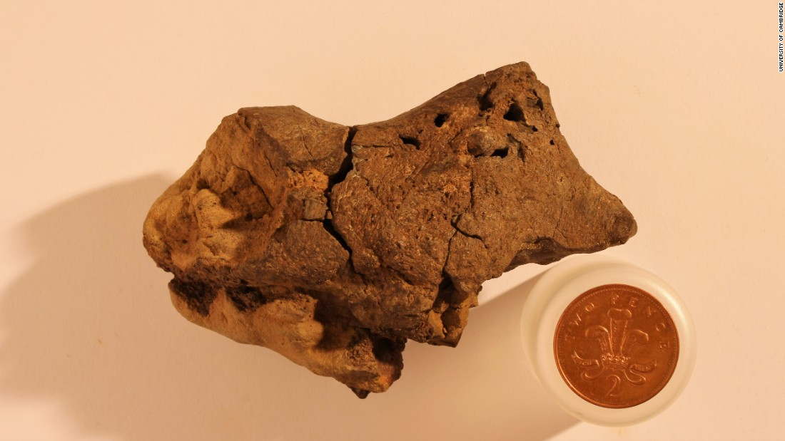 """Researchers found the <a href=""""http://www.cnn.com/2016/10/28/health/fossil-brain-cambridge-trnd/index.html"""">first preserved dinosaur brain</a> in history in 2016. They believe it was preserved due to the dinosaur dying in a swamp-like environment which mixed low levels of oxygen -- known to slow decay -- and acidity which can preserve soft tissue for long periods. It is 130 million years old."""