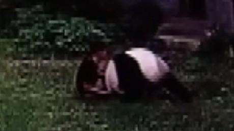panda wrestling match pkg