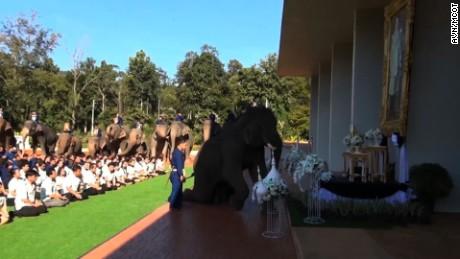 cnnee vo rec elefantes muestran respeto al rey tailandia _00001428