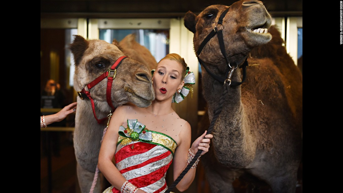 Lauren Renck, one of the Radio City Rockettes, is nudged by a camel in New York on Tuesday, November 1. Live camels will be part of the Radio City Christmas Spectacular that starts on November 11.
