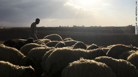 Shepherd refused ISIS escape route due to his 'Arab sheep'