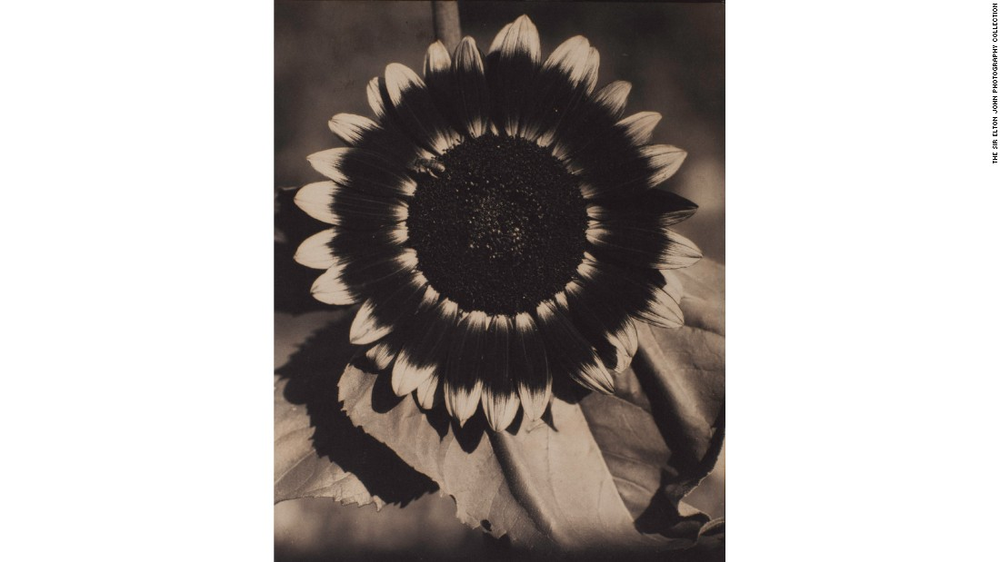 """A Bee on a Sunflower"" (c.1920) by Edward Steichen"