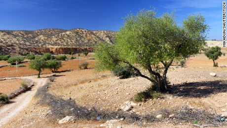 Argan trees help support the local environment by providing soil stabilization.