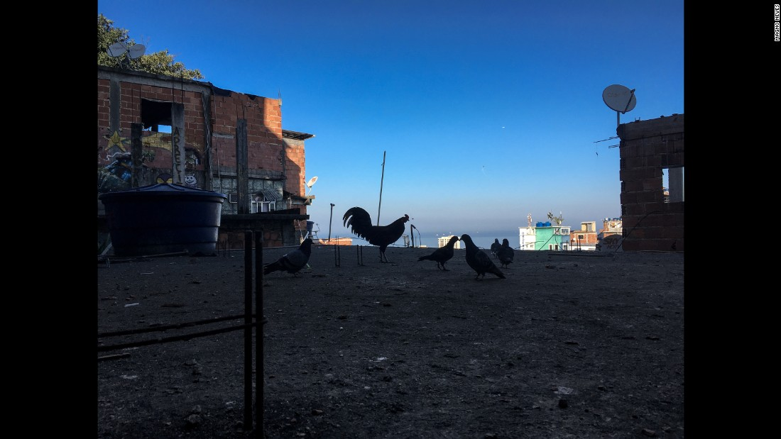"The pictures have a bit of everything, even humor. Magno Neves said he could not help snapping a photo of a rooster while portraying his home -- Cantagalo is Portuguese for ""Rooster's Crow."""