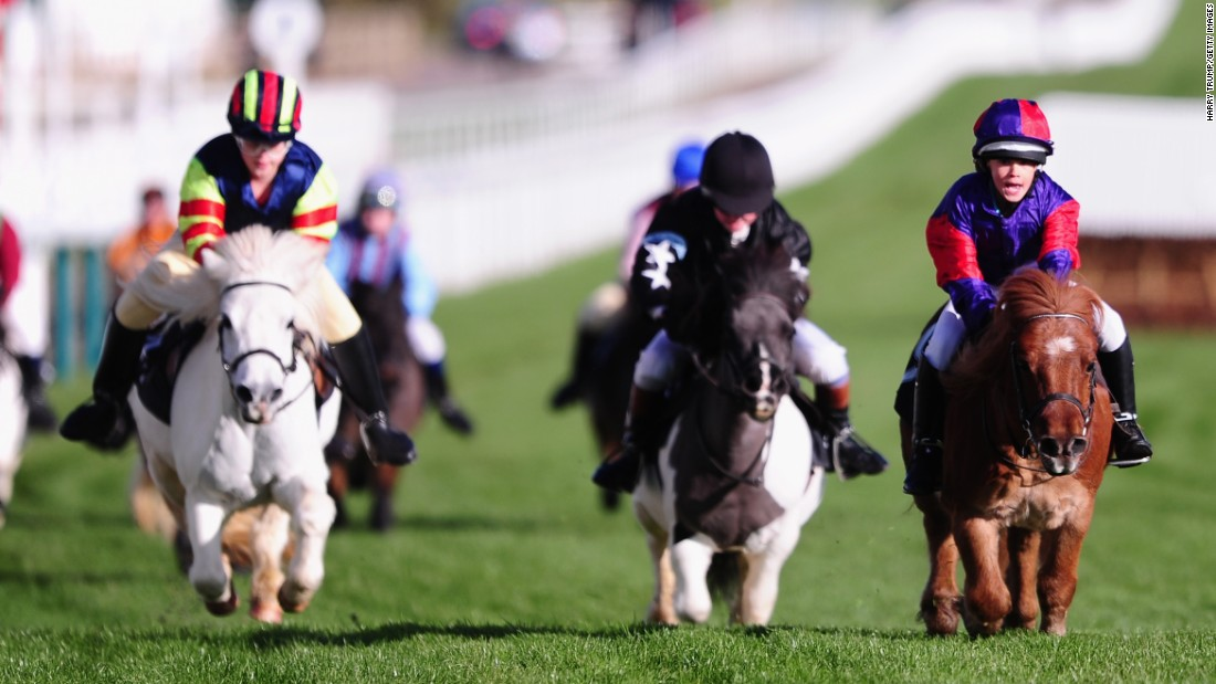 Shetland ponies race in Cheltenham, England, on Friday, November 11. Annabel Candy, left, rode Fordleigh Sophia to victory.