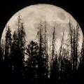 13 Super Moon 2016