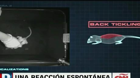 cnnee directo usa ratones risa cosquillas_00001505