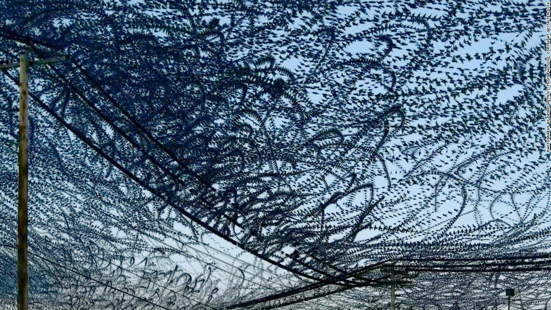 Dennis Hlynsky traced a flock of birds' flight patterns on video. He then created this composite by layering the individual frames on top of one another.