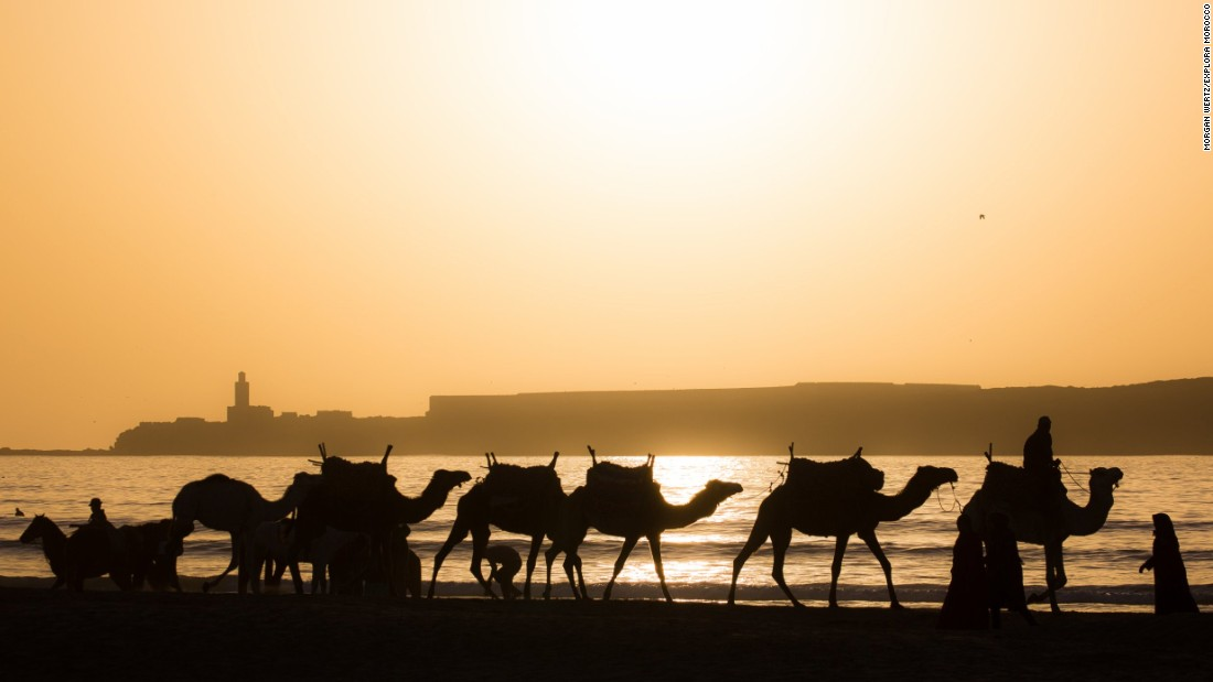 "There's more than one way to reach Essaouira, however. Transfers from Marrakech are available, but other, more interesting options, can be pursued. <a href=""https://www.ranchdediabat.com/en/activities/the-trail-rides/the-berberride/"" target=""_blank"">Racha De Diabat</a> run trail rides on camels and horseback, with one eight day excursion starting in Agadir, 107 miles south, and working your way through valleys and along beaches, camping with Berber communities along the way."
