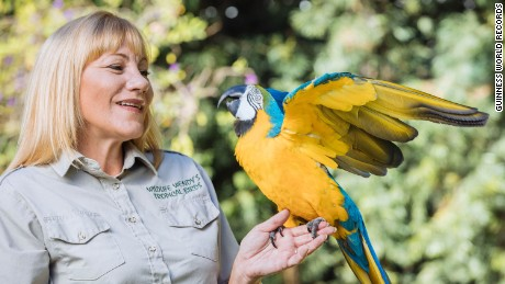 Skipper Blue, the Macaw, and his trainer Wendy Horton, USA, broke the records for the most rings  placed on a target by a parrot in one minute.