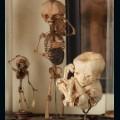 morbid curiosities 5