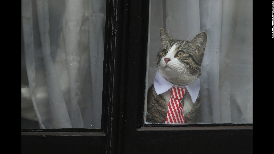<strong>November 14:</strong> A cat named James wears a collar and tie as he looks out the window of the Ecuadorian Embassy in London. The embassy has been home to WikiLeaks founder Julian Assange for more than four years now.