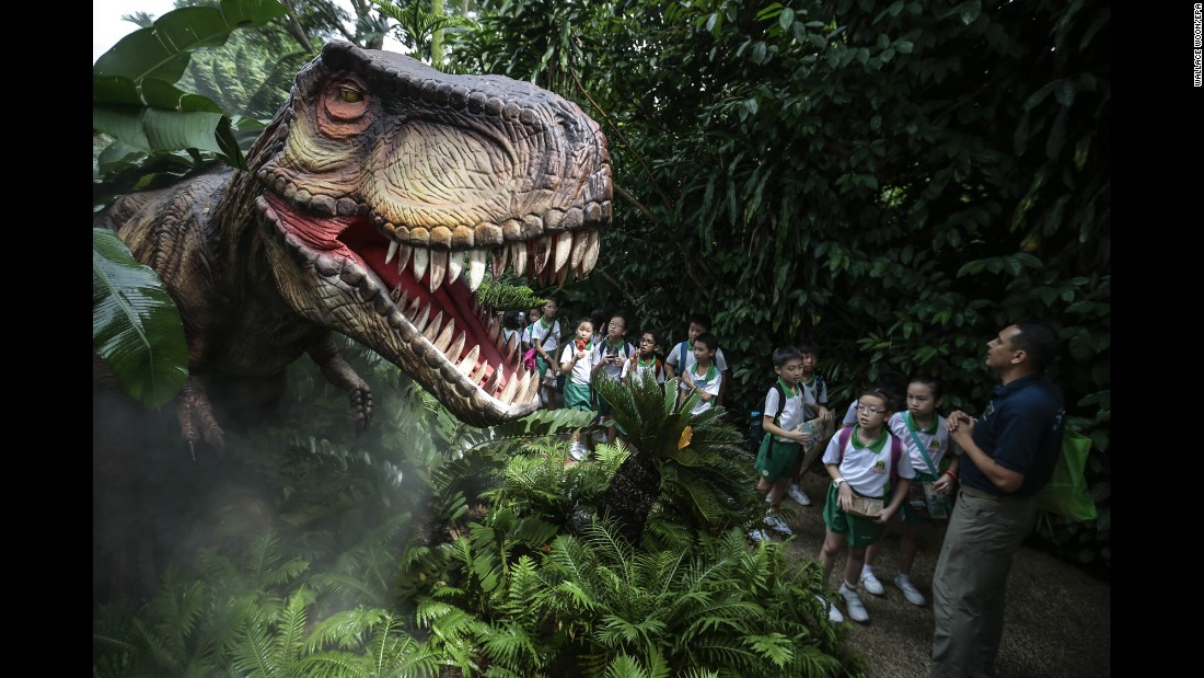 Students look at an animatronic Tyrannosaurus rex as they visit the Singapore Zoo on Wednesday, November 16.