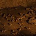 animals climate change