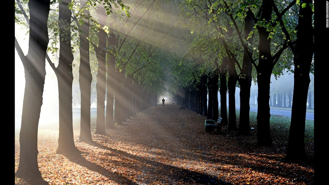 A person walks along linden trees during an early morning mist in Hanover, Germany, on Tuesday, October 18.