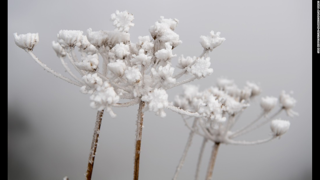 Snow crystals are seen on dried flower petals on the Wallberg mountain near Tegernsee, Germany, on Wednesday, October 12.