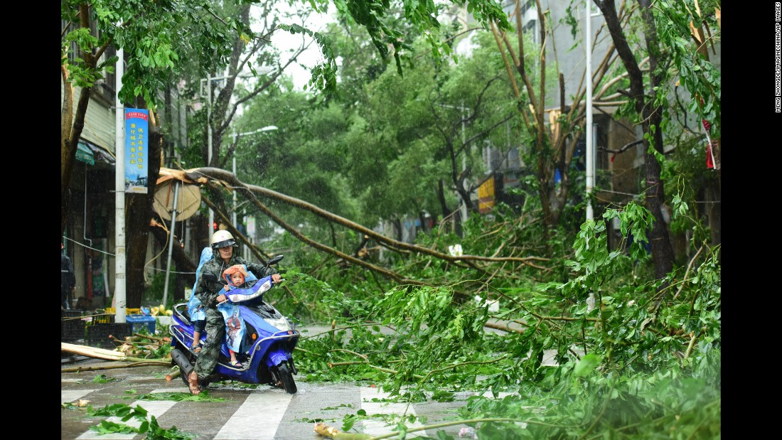 A cyclist rides past trees uprooted by Typhoon Sarika in Haikou, China, on Tuesday, October 18.
