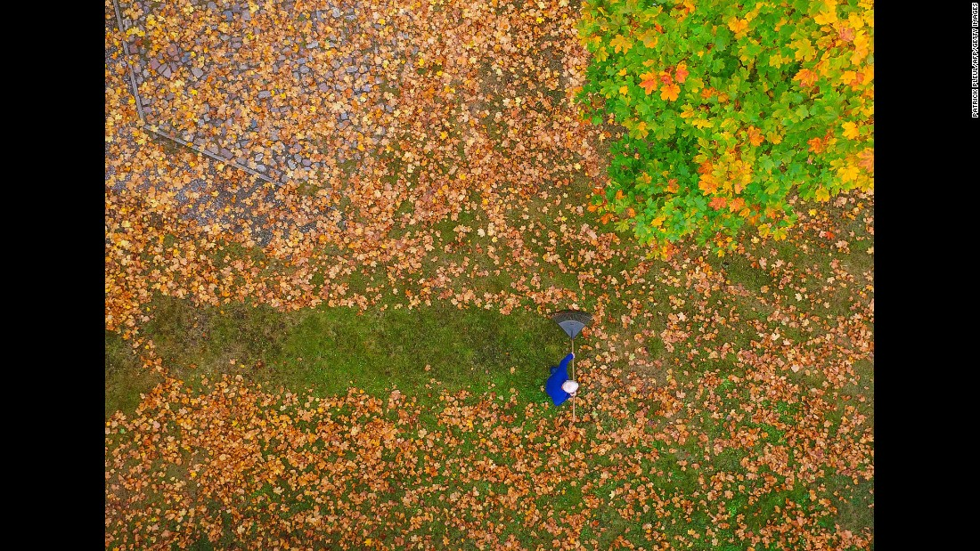 A man rakes colorful leaves in Brandenburg, Germany, on Tuesday, October 18.