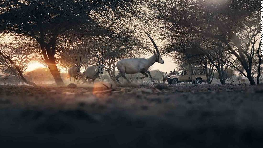 Just two hours away from Abu Dhabi city center, sits Sir Bani Yas, one of the largest natural islands in the United Arab Emirates. It's a sanctuary for roughly 10,000 protected animals, including gazelles, cheetahs and hyenas.