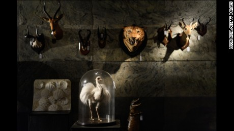 Dodo skeleton, 'icon of extinction,' sold for $431,000