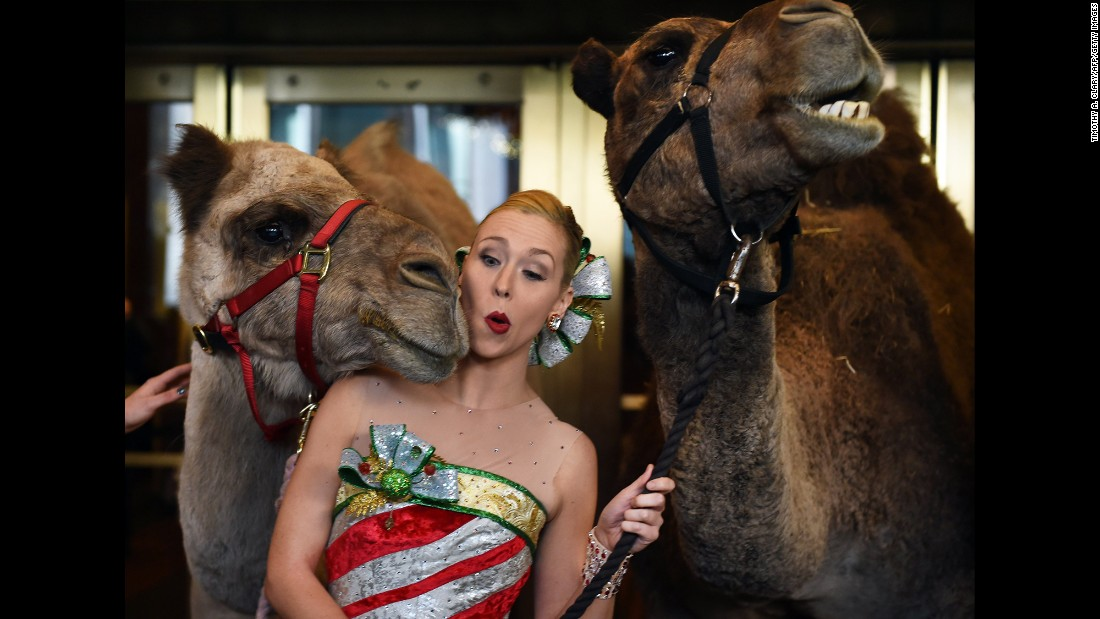 Lauren Renck, one of the Radio City Rockettes, is nudged by a camel in New York on Tuesday, November 1. Live camels are part of the Radio City Christmas Spectacular that started on November 11.