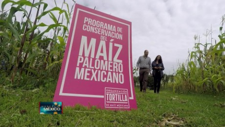 cnnee pkg krupskaia maiz palomero rescate semillas mexico rafael mier_00001513