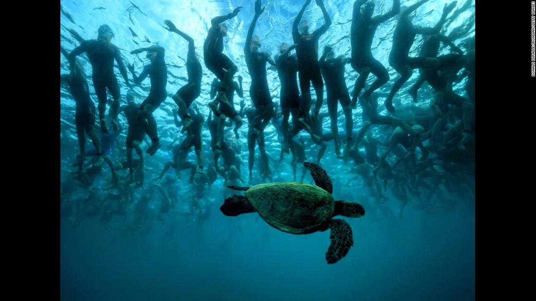 A sea turtle swims under Ironman triathletes in Kailua-Kona, Hawaii, on Saturday, October 8.