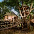 Timbertop Hangout Treehouse - Blue Forest Photo Credit Alex Whittle
