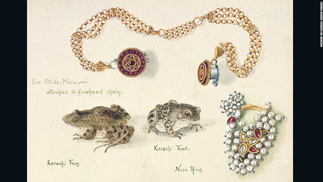 After the death of her husband, Olivia Tonge traveled throughout Asia, all the while drawing what she saw. While shortsightedness kept her from doing landscapes justice, she had a penchant for capturing the little things -- like these animals and jewels she saw in India.