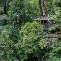 woman ziplining and treehouse MB