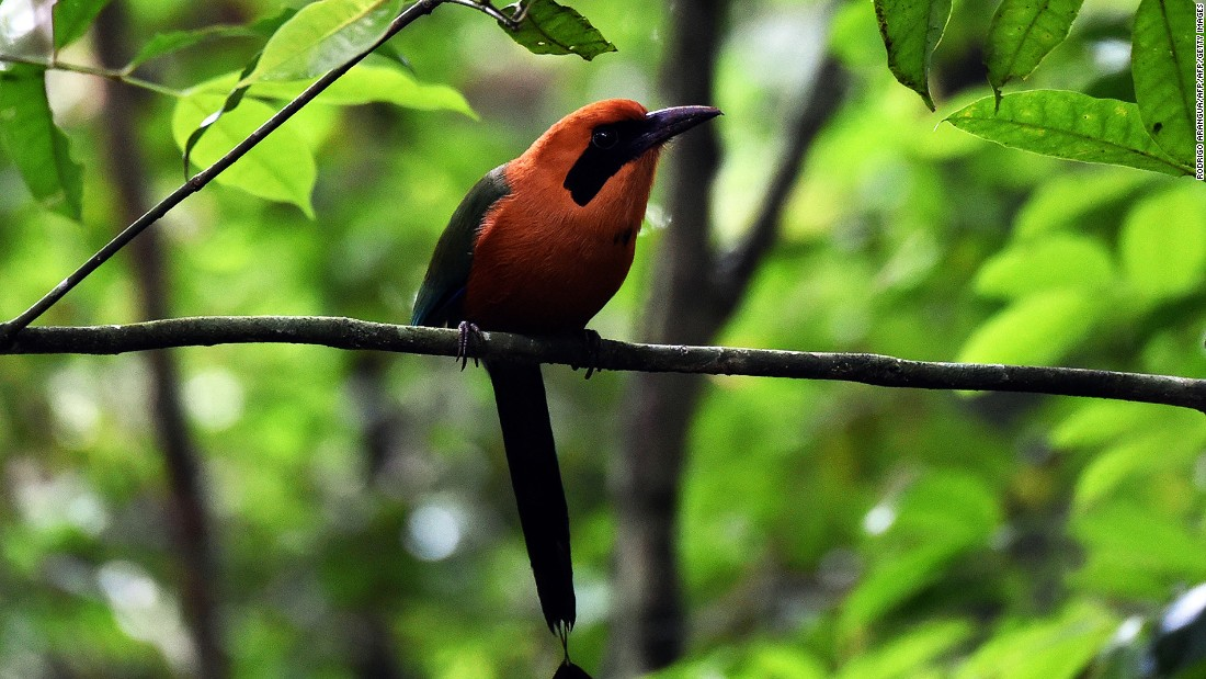 Panama boasts an impressive biodiversity, including more than 200 mammal species and 1,000 bird species. Its forests are refreshingly far from civilization and Christmas atmosphere.