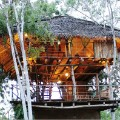 Saraii tree house