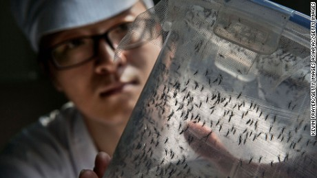 Chinese PhD student and researcher Zhang Dongjing displays a container of sterile adult male mosquitos that are ready to be released in a lab in the Mass Production Facility at the Sun Yat-Sen University-Michigan University Joint Center of Vector Control for Tropical Disease on June 20, 2016 in Guangzhou, China.