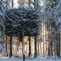 treehotel nest