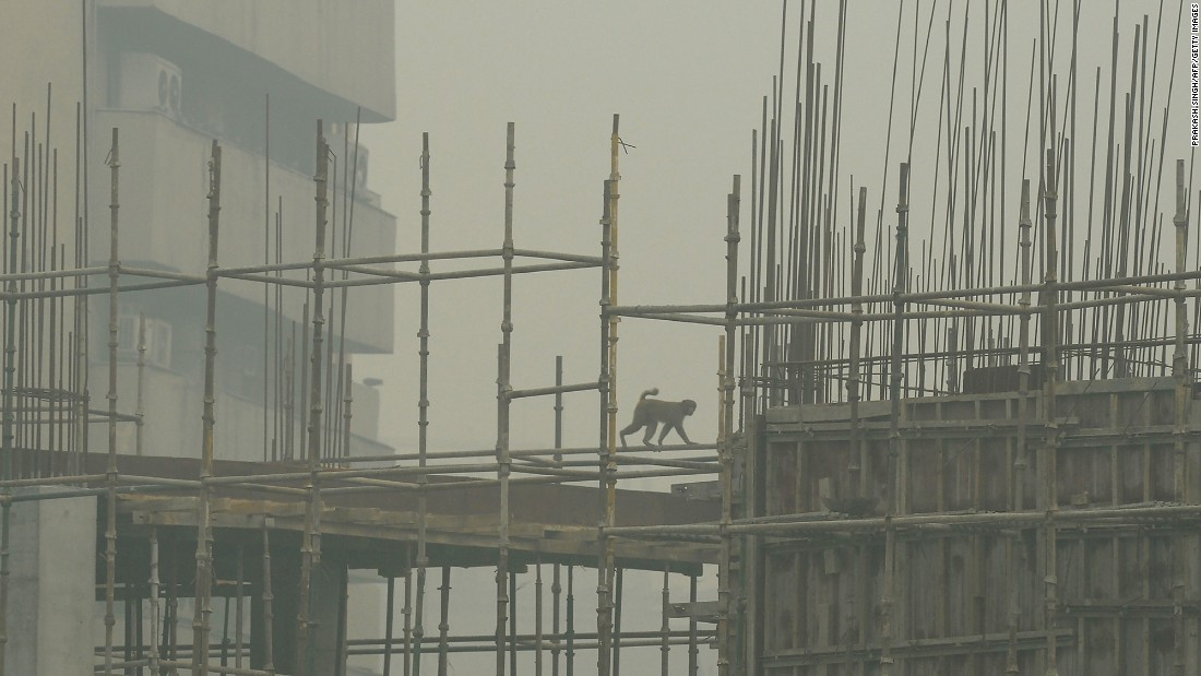 A monkey crosses a scaffolding at a construction site as smog obscures the New Delhi skyline on November 2.