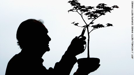 "Average bonsai rarely exceed 4 feet tall, with most falling between 1 inch (known as ""poppy-seed size bonsai"") and 80 inches (called ""Imperial"" bonsai)"