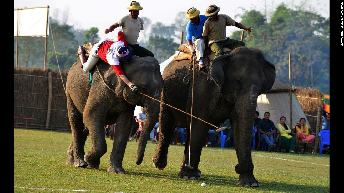 Elephant polo players from team Irelephants, in red, and team Himalayan Tiger Foundation, in blue, vie for the ball during the International Elephant Polo Competition in Kawasuti Gondhat, Nepal, on Thursday, December 1. Teams from across the world come every winter to the jungles of southern Nepal to compete in the tournament, one of the sport's most prestigious events.