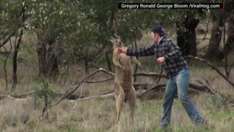 cnnee pkg jeanne moss hombre pelea salva a su perro de un canguro_00000303