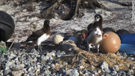 Plastic from around the world washes up on Midway Atoll in the remote Pacific Ocean.
