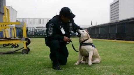 cnnee pkg digital daniela patino perros policia jubilados mexico_00013104.jpg