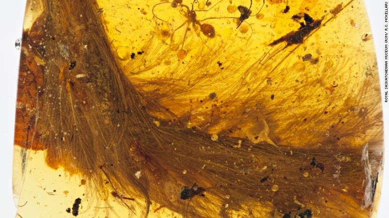 Image result for dinosaur tail amber