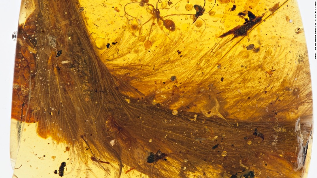 "The <a href=""http://www.cnn.com/2016/12/08/health/dinosaur-tail-trapped-in-amber-trnd/index.html"">tail of a 99-million-year-old dinosaur</a> was found entombed in amber in 2016, an unprecedented discovery that has blown away scientists. The amber adds to fossil evidence that many dinosaurs sported feathers rather than scales."