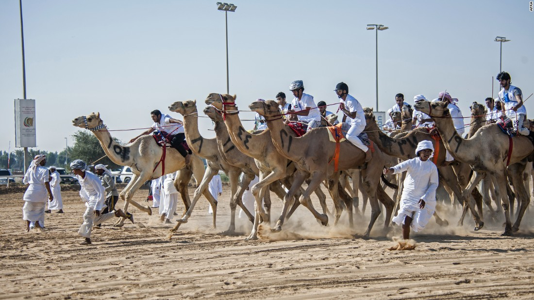 At the second annual National Day Camel Marathon, 100 participants raced to the finish line.