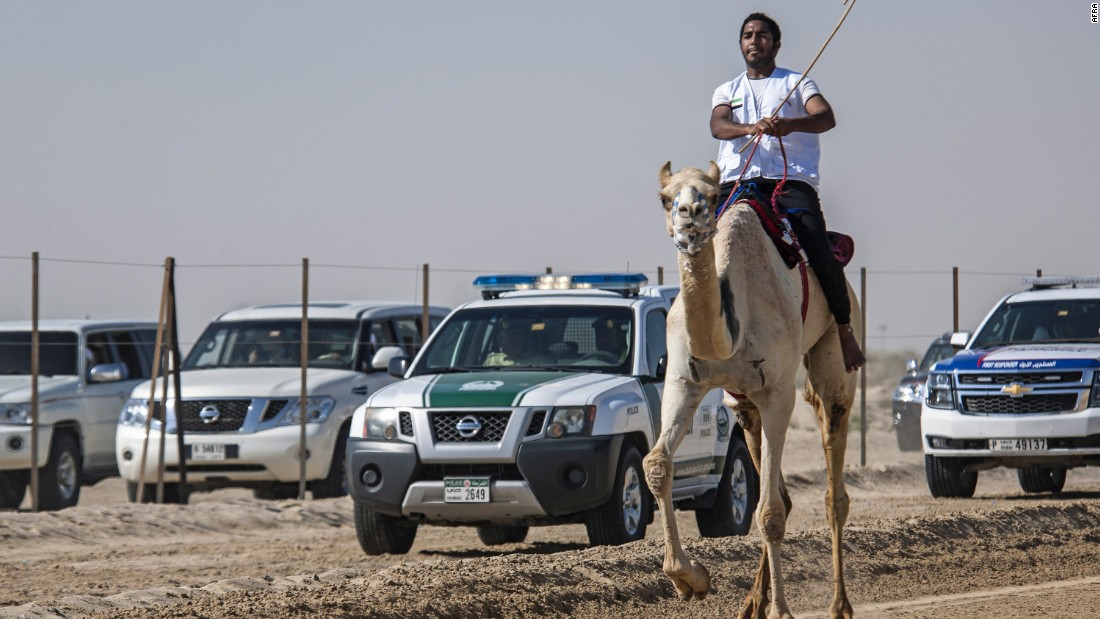 Winner Al Hammadi, who has been riding since age 8, says his connection with his camel is the key to his success.