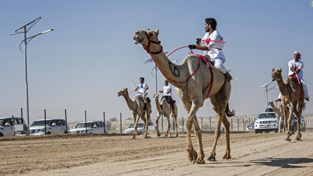 Camel racing dates back to the 7th century, and is one of the oldest still-practiced traditions in the Middle East.