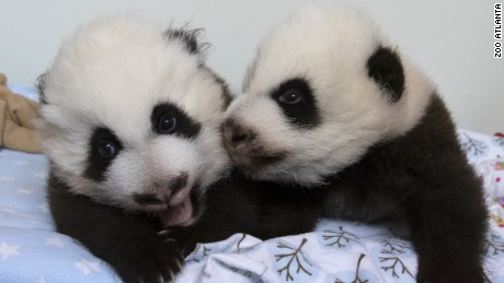 Twins on November 16