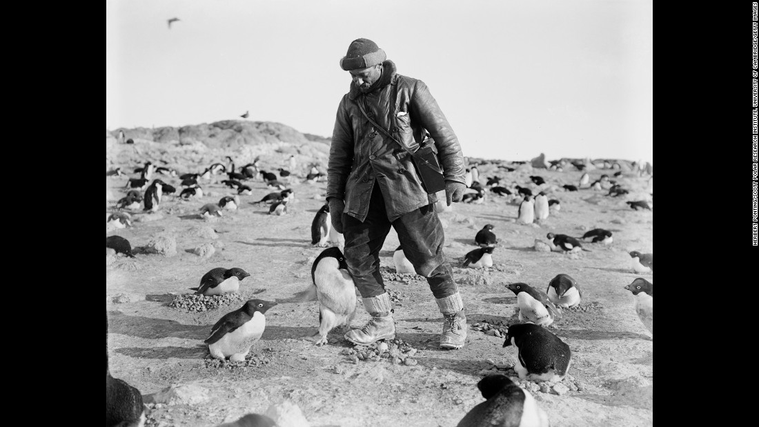 Photographer Herbert Ponting, who traveled to Antarctica with Scott's team, is attacked by an angry penguin on Ross Island.