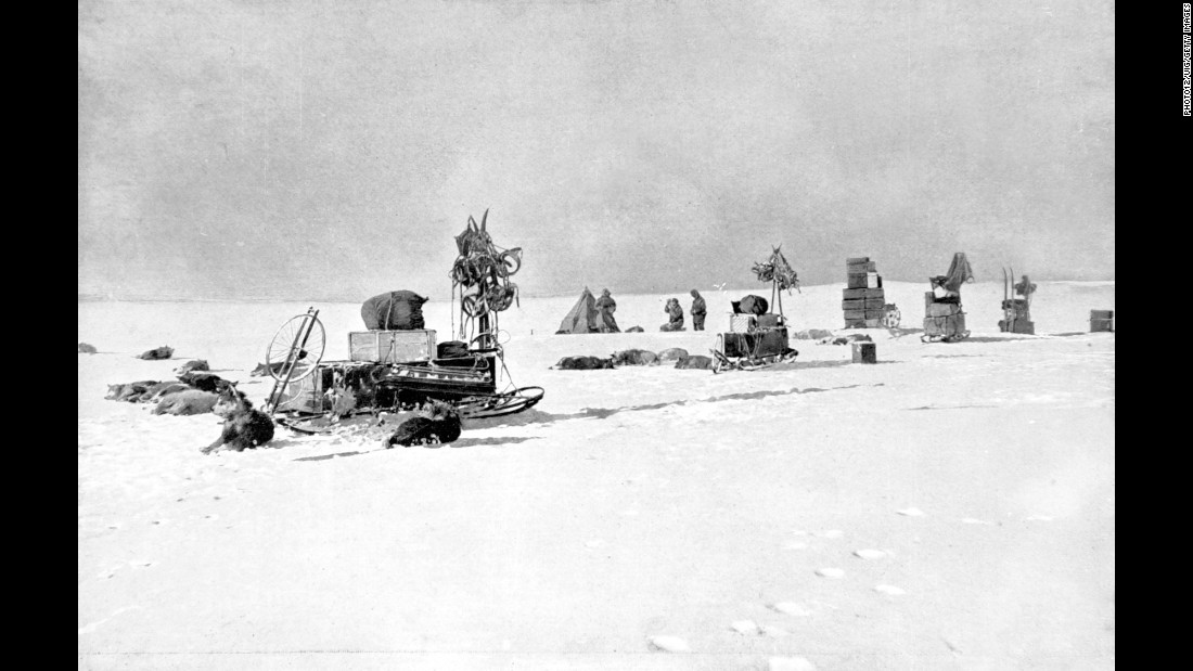 Some of Amundsen's dogs rest at a supply depot. Prior to the final journey, each team had made long treks along their intended paths to drop off supplies at regular intervals. Amundsen's supply depots were stocked with much more food and fuel, and the intervals were more consistent. They were also easier to find because black flags were placed on both sides of the depot along with distance and directions to the depot -- just in case the team got a little off-track and needed to adjust course. Scott's depots had only one flag.